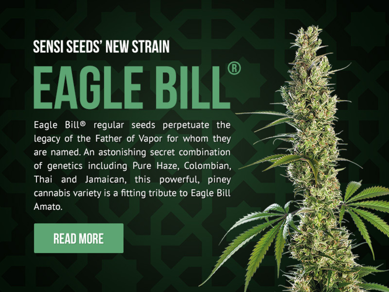 Sensi Seeds's Eagle Bill - Read More